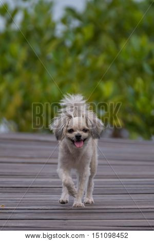 Dog So Cute Travel At Mangrove Forrest (thung Prong Thong)