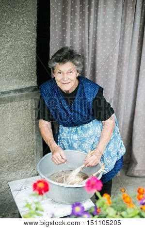 Senior woman cleaning and washing freshly slaughtered chicken outside in front of her house.