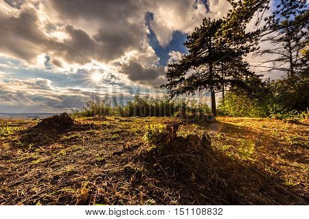 Hill with trees bathed in sunshine. Moravian landscape Svitavka.