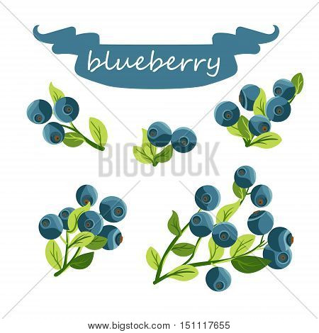 Set of blueberry composition. Different types of blueberry branches. Isolated on white. Vector illustration.