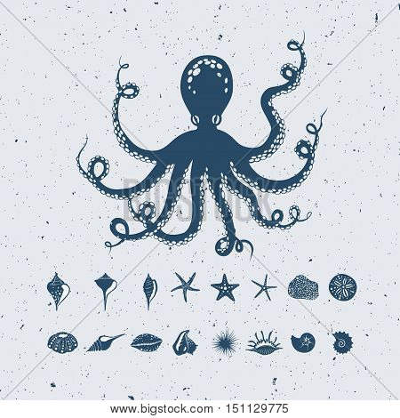 octopus, seashells and mollusks, vector nautical set