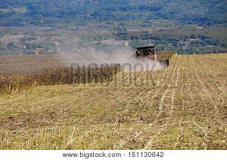 VETRINTSI BULGARIA - SEPTEMBER 24 2016: Sunflower gathering in the fall