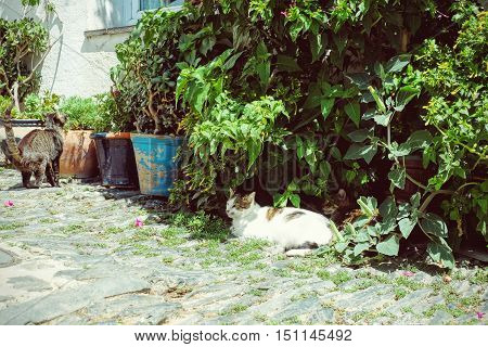 Cats in an Alley Street in Cadaques Catalunya Spain