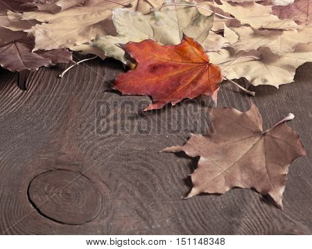 the beautiful autumn background. Maple leaves border on wooden background