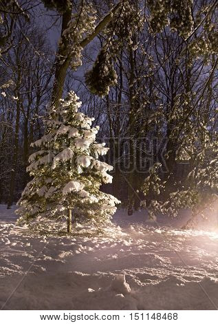 Christmas night in beautiful fairy winter forest
