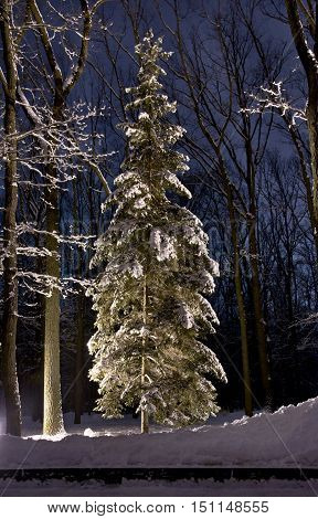 Beautiful Winter Forest At Night