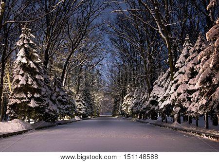 Beautiful Winter Park At Night
