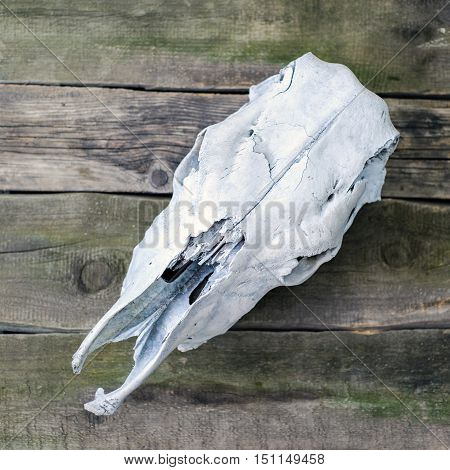 White Cow Skull On A Wooden Background