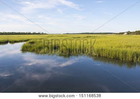 A salt marshland landscape at Fripp Island SC