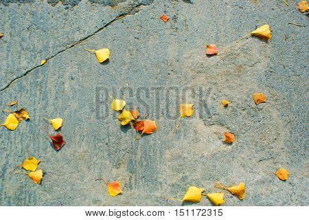 Concrete Floor Texture And Dry Leaves