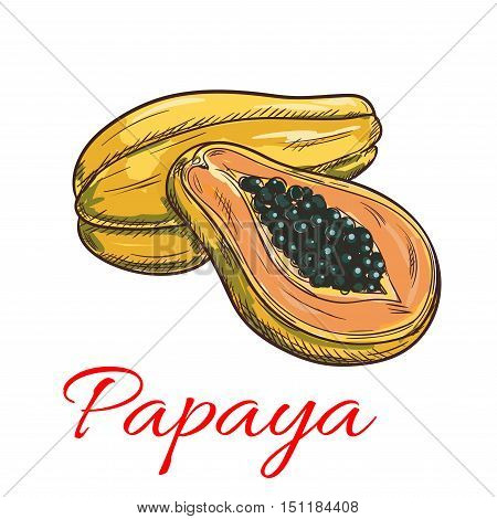 Papaya fruit vector color sketch icon. Isolated whole and half papaya slice. Sweet fruit product emblem for juice or jam label, sticker, farm store design element