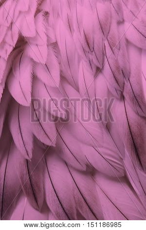 Pink fluffy feather closeup - Selective focus on some feathers