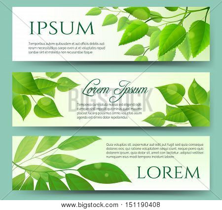 Green leaves banners with white background. Green leaf nature eco spring headers.Vector illustration