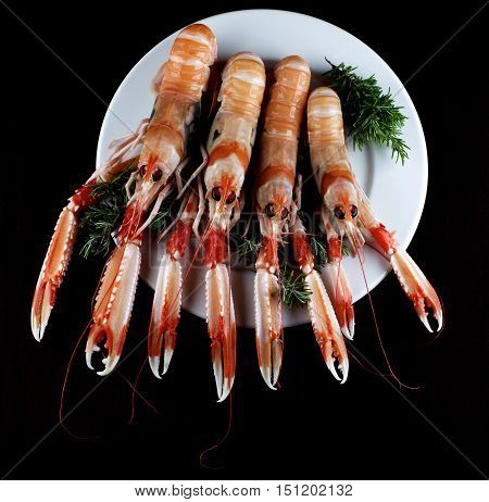 Delicious Raw Langoustines with Rosemary on White Plate closeup on Dark Wooden background. Top View