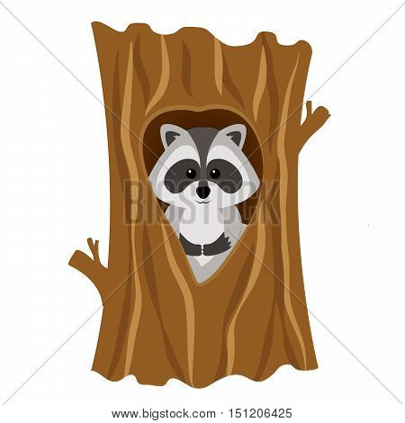 Funny raccoon inside tree in hollow isolated on white background. Adorable vector raccoon. Cute cartoon pet. Charming baby raccoon.