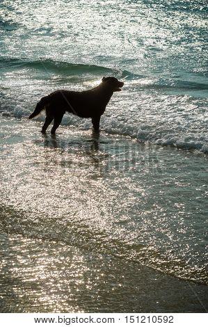the dog waited for someone on the beach in the island.