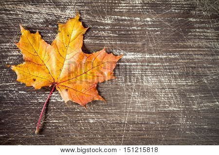 Autumn leaf on wooden background with copy-space