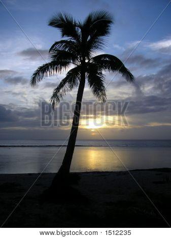 Tongan Tranquility, Tonga