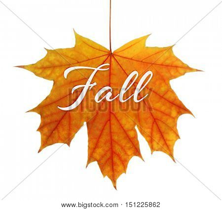 Word FALL on yellow leaf against white background.