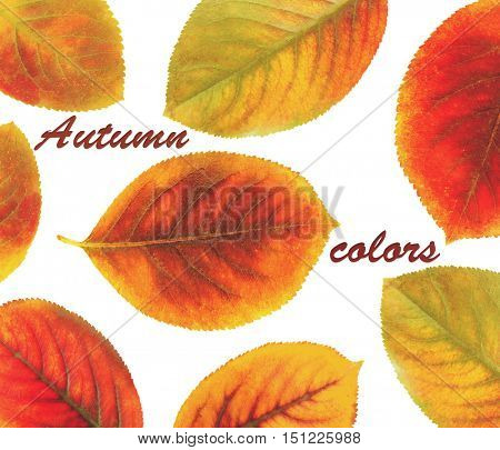 Text AUTUMN COLORS and yellow foliage on white background.