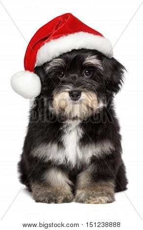Cute sitting Bichon Havanese puppy dog wearing a retouched Christmas - Santa hat. Isolated on a white background