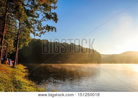 PangUng lake and pine trees forest with warm sunlight on morning in Northern of Thailand.