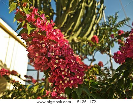 Bush plant branch with bright red small flowers