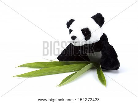 Panda, toy, teddy, bear, cute, brown, eye, black, white, childhood, animal, isolated, gift, fluffy, white, sitting, fur, soft, background, stuffed, object, small, fun, single, furry, doll, baby, love, plush, studio, softness, one, isolated, book, pencil