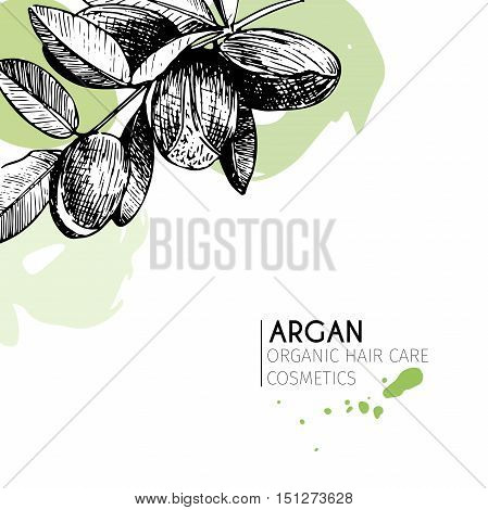 Vector set of hair care ingredients. Organic hand drawn elements. Argan branch. Use for cosmetic package shop store products spa salon wellnes program procedure skin hair care