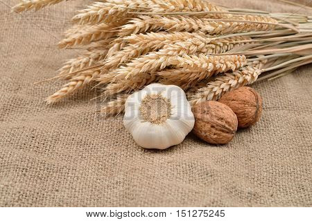 Dry garlic and unbroken nuts on a jute bag background with bunch of wheat behind them. Selective focus. Rustic image. Country style. Space for text