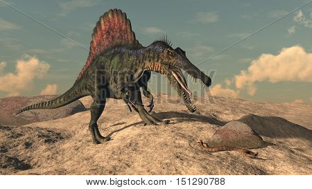 Spinosaurus dinosaur hunting a snake in the desert by sunset - 3D render