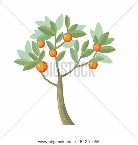Vector tree. Orange isolated on white. Citrus trees belong to single genus Citrus and remain entirely interfertile. Vector