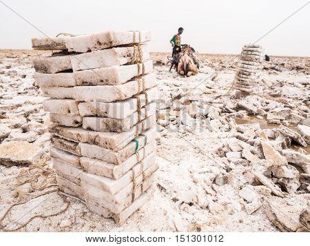 DANAKIL DEPRESSION ETHIOPIA - JUNE 29 2016: Afar man mining salt from salt flats in Afar region Danakil Depression Ethiopia and loading it onto a camel. Pile of salt blocks in the foreground.