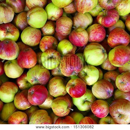 Red-geen juicy apples for food industry, background.