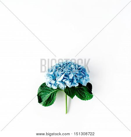 beautiful hydrangea flower isolated on white background. flat lay top view