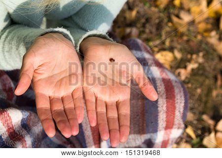 Ladybird is on the palm of the girl. A girl sitting on the ground in the park.