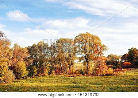 Autumn nature landscape-yellowed autumn trees in autumn sunny weather. Sunset autumn view of autumn trees lit by sunlight. Colorful autumn view of autumn trees. Autumn nature in sunlight