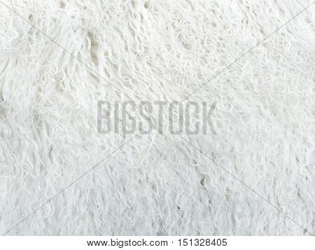 White long hair fur for background or texture. Natural snow-white dressed fur.