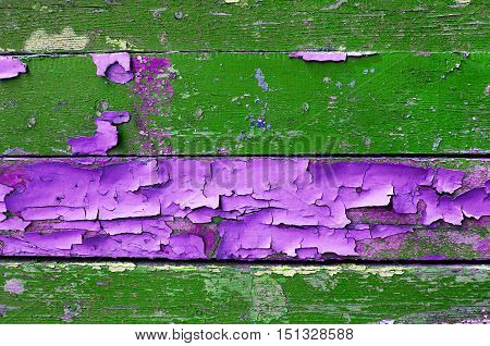 Texture background - old painted wooden surface with peeling green and pink paint.