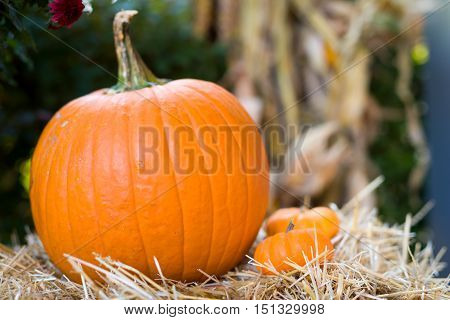 Festive outdoor arrangement of orange gourds and pumpkins for the fall holiday season