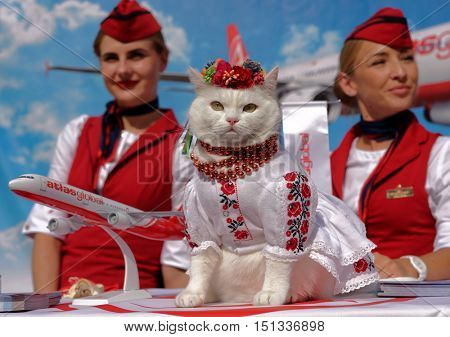 KIEV, UKRAINE - OCTOBER 1, 2016: White cat in Ukrainian national costume used in promotion of Turkish air company Atlas Global on the most popular tourist street Andreevsky descent