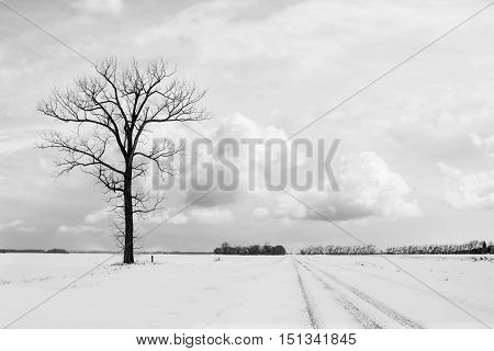 black and white landscape winter scene of an image of a lone bare tree beside a gravel road going into the distance.