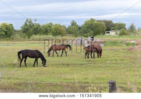 Summer landscape: a horse grazing on a green field