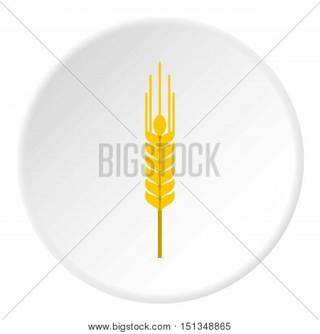Spikelet of wheat icon. Flat illustration of spikelet of wheat vector icon for web