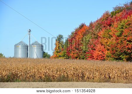 ANGE- GARDIEN QUEBEC CANADA 10 07 2016: Corns farms in Ange Gardien located within the Rouville Regional County Municipality in the province's Monteregie region