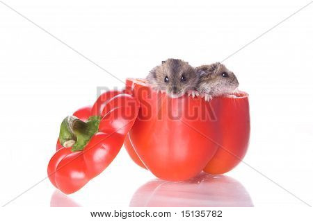 hamsters and red papper