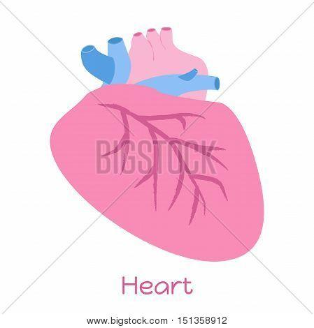 Heart illustration in flat style. Viscera icon internal organs.