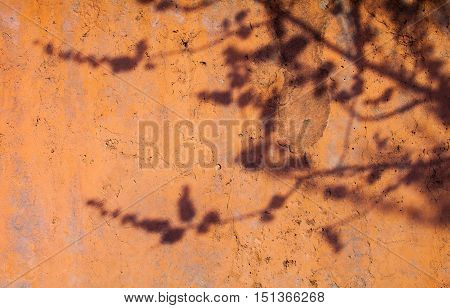 Painted concrete surface with the shadow of the tree branch