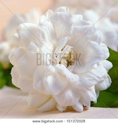 Jasmine Flower On Wooden Board Background