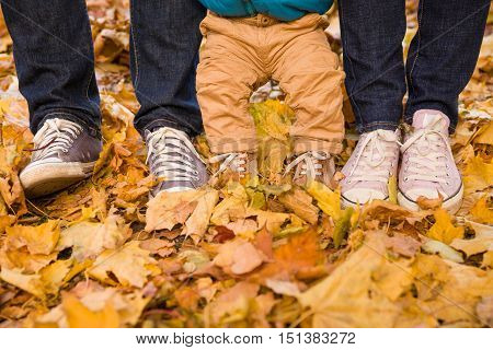 Top view on legs of a family on yellow marple leaves background outdoors on autumn day. Couple and baby boy holding hands and enjoying walk in park. Lifestyle and family concept